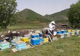 تولید بیش از ۳ هزار و ۴۰۰ تن عسل در استان همدان