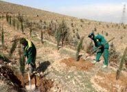 یک میلیون اصله نهال در استان همدان کاشته میشود