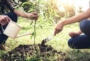 نهال رایگان هدیه هفته منابع طبیعی به مردم