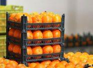 توزیع هزار تن میوه شب عید در استان همدان