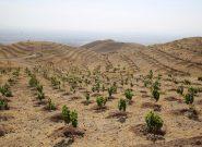 ۴۶۰ هکتار جنگل دست کاشت در شهرستان ملایر ایجاد شده است