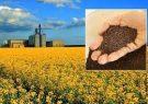 ۱۲۹ میلیارد ریال به کشاورزان کلزاکار استان پرداخت شد