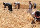 ۱۹۰ هزار تن گندم از کشاورزان استان همدان خریداری شده است