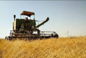 آغاز برداشت گندم در همدان