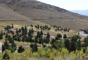 کاربرد زیست محیطی ۶۰۰ هزار هکتار مراتع همدان